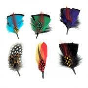 Fashion Side Feather 6-Pack