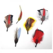 Assorted Side Feather 6-Pack