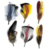 Dapper Side Feather 6-Pack